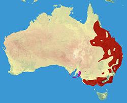 Koala_Range