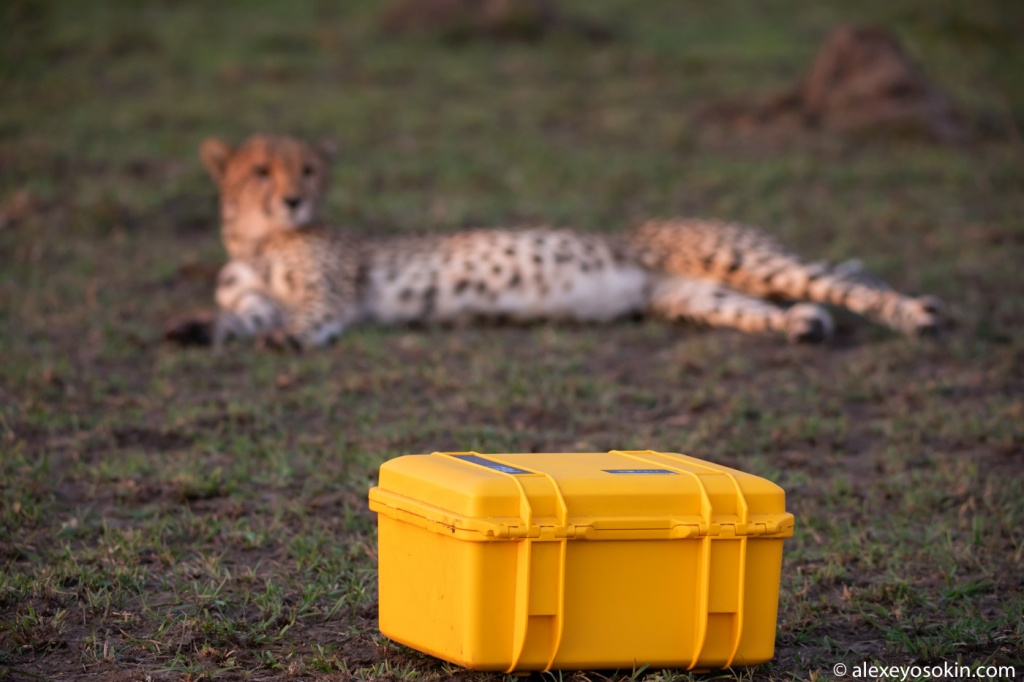 cheetah_peli_case_4.jpg