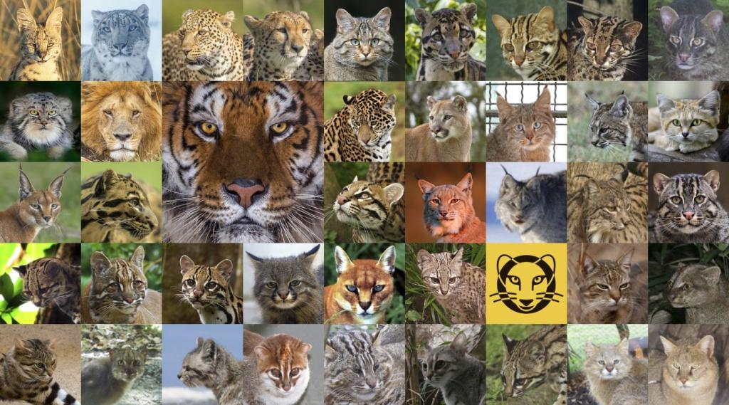 41cats_1400.jpg